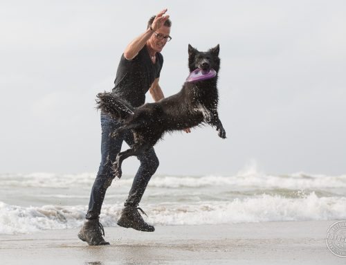 Dog Frisbee beginners cursus start donderdag ?