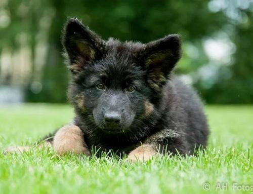 Samenwerken met uw pup er is nog 1 plekje op de Dinsdag 20.30!