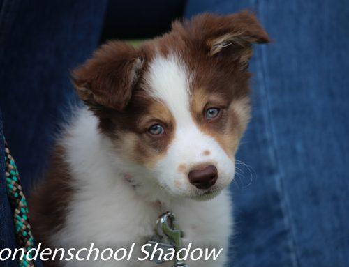 Samenwerken met de pup op vrijdagavond 19.00 VOL!